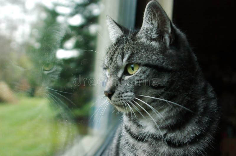 猫视窗 免版税库存图片