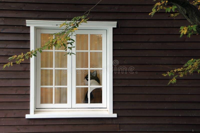 猫视窗 免版税图库摄影