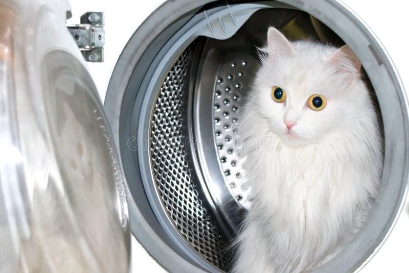猫设备洗涤物 免版税库存照片
