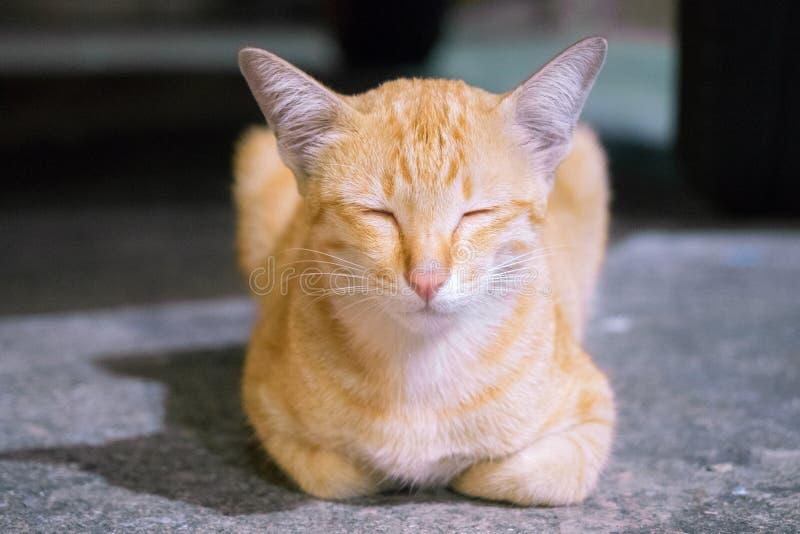 猫蹲下 免版税库存图片