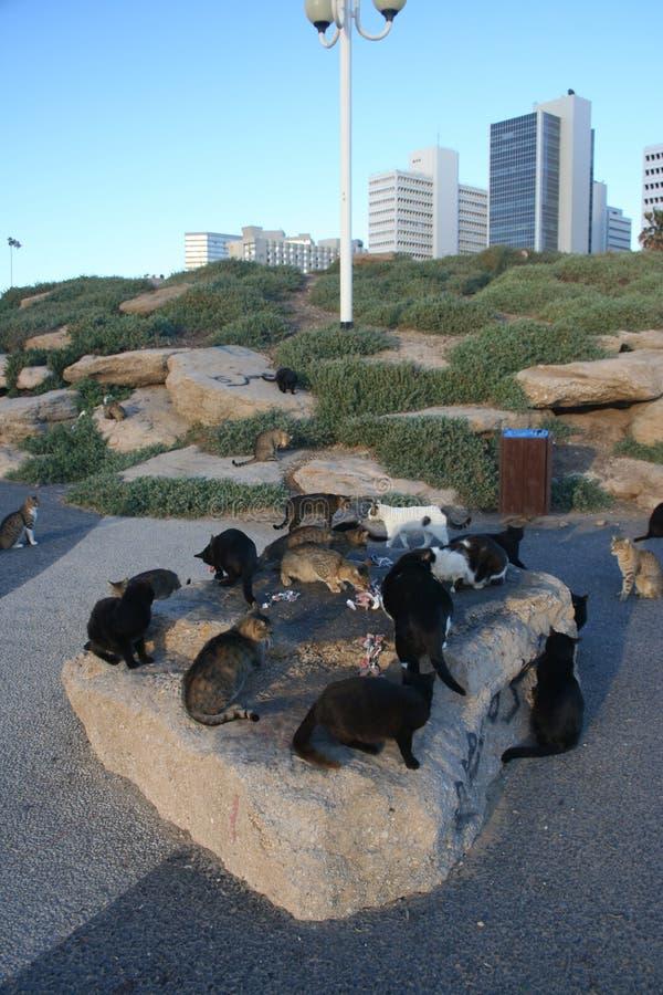 猫迷路者 库存图片