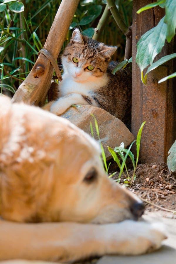 猫逗人喜爱的狗少许纵向 库存图片