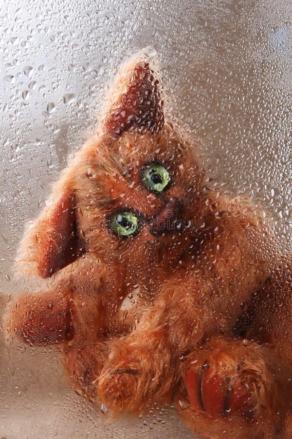 猫逗人喜爱的看起来的多雨软的玩具&# 库存图片