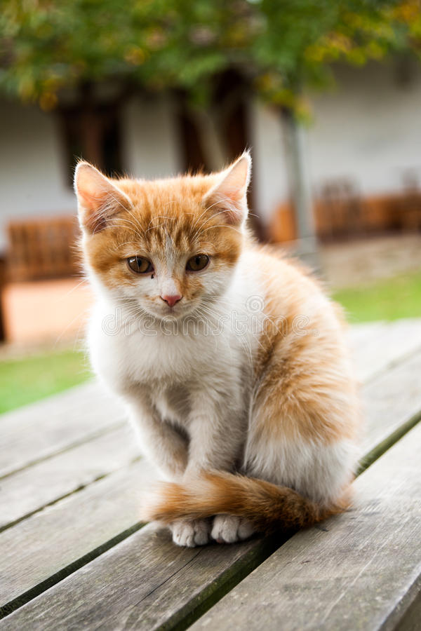 猫逗人喜爱的滑稽的灰色 库存图片