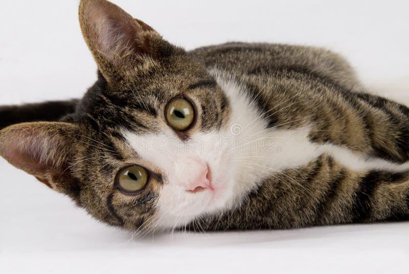 猫逗人喜爱的teenege 免版税库存图片