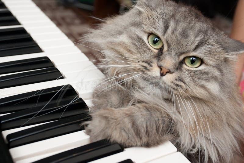 猫钢琴演奏家 免版税图库摄影