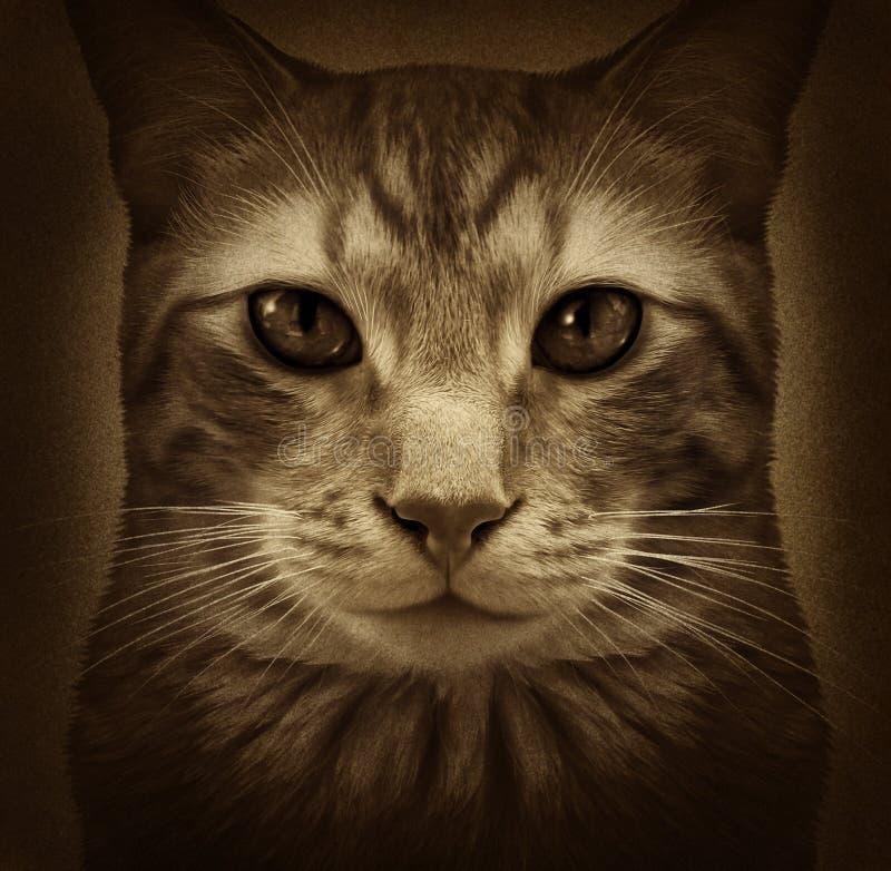 猫难看的东西 库存例证