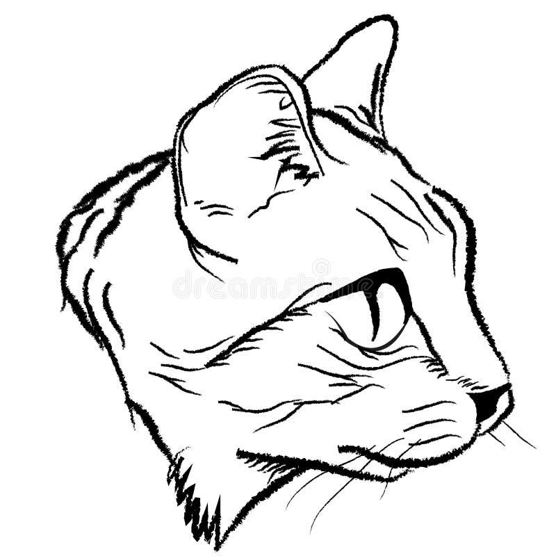 猫面孔 向量例证