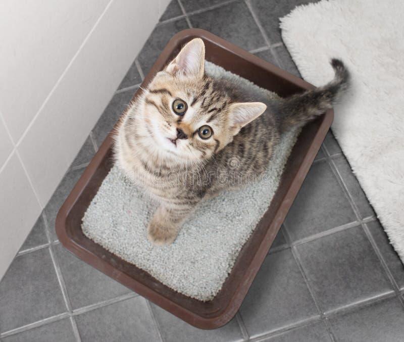 猫顶视图在垃圾箱坐卫生间地板 库存图片