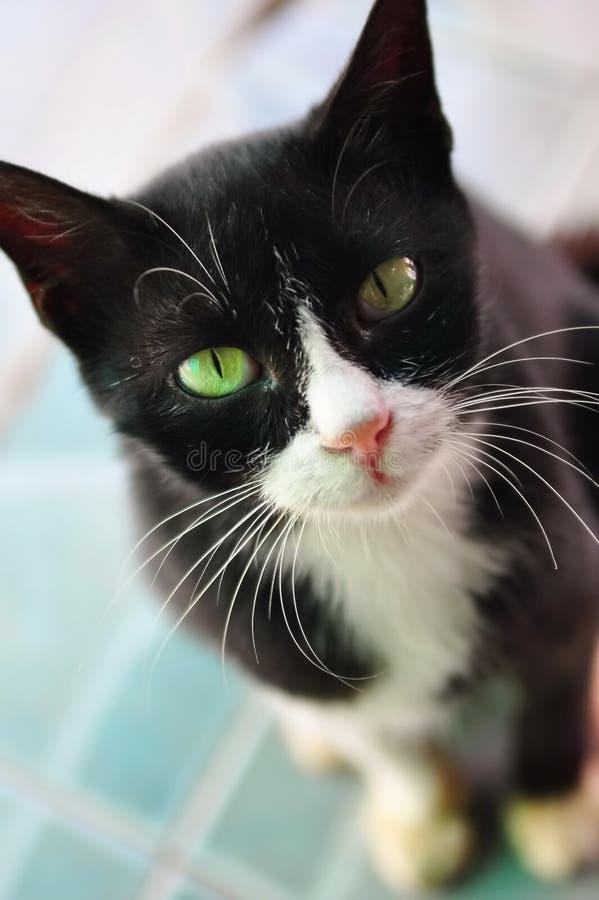 猫食等待 免版税图库摄影