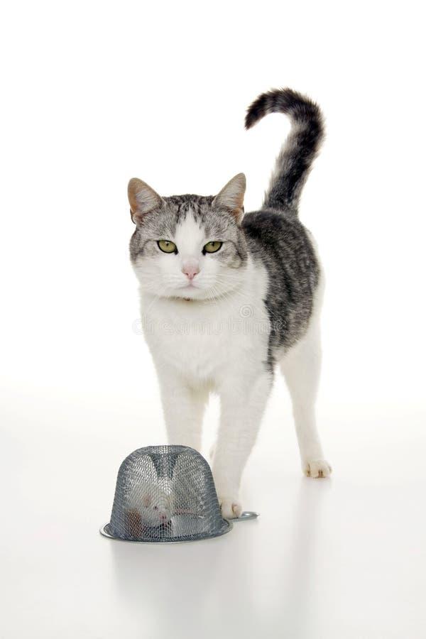 猫鼠标捕鼠器 免版税图库摄影