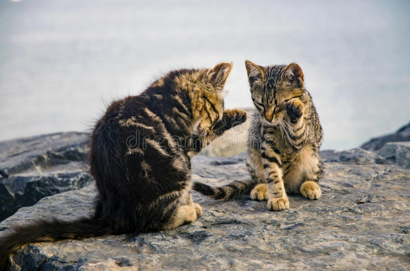 猫,在海滩的逗人喜爱的小猫晃动 免版税库存图片