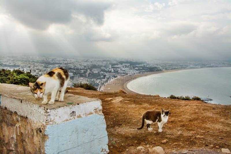 猫,在阿加迪尔,摩洛哥的看法 库存照片