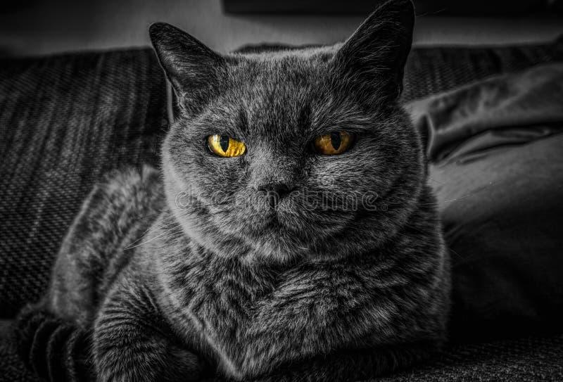 猫,颊须,黑,黑白