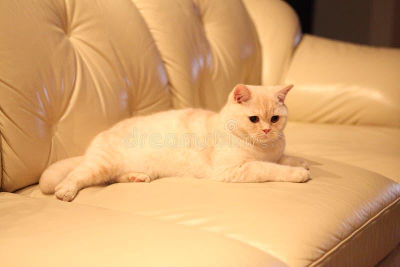 猫, 免版税库存照片