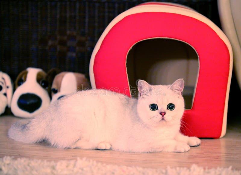 猫, 库存照片