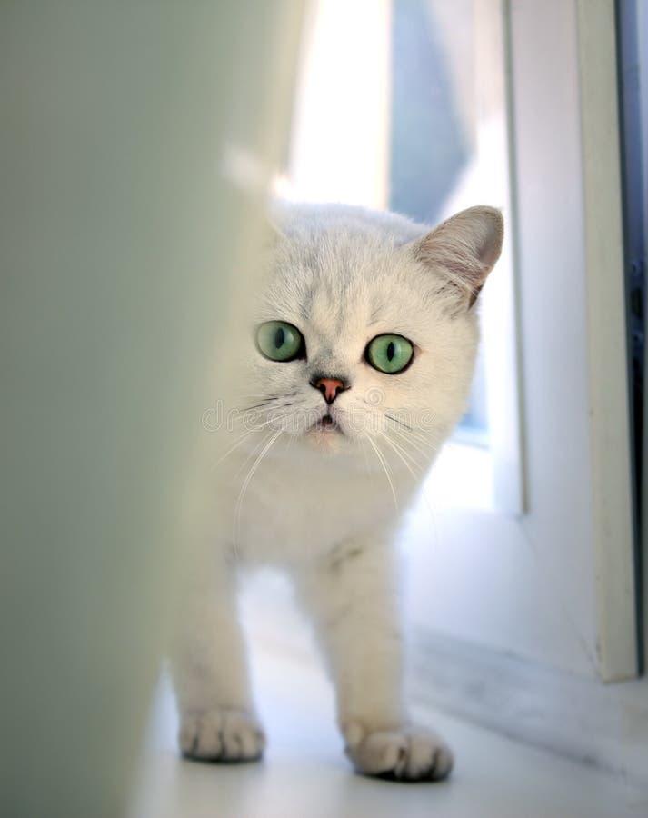 猫, 图库摄影