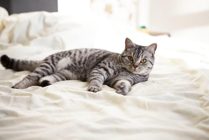 猫, 库存图片
