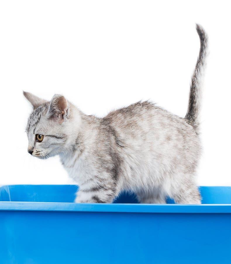 猫洗手间 免版税库存照片