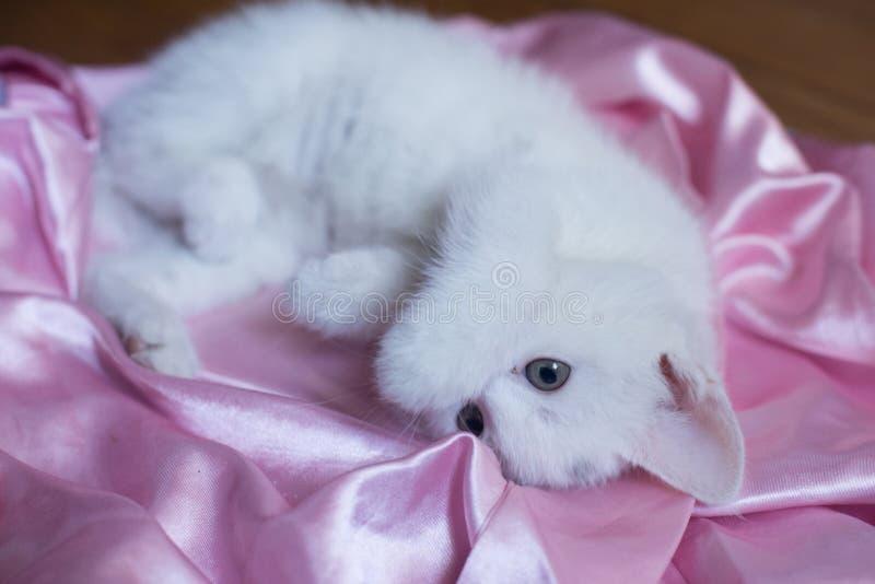 猫画象柔软 库存照片