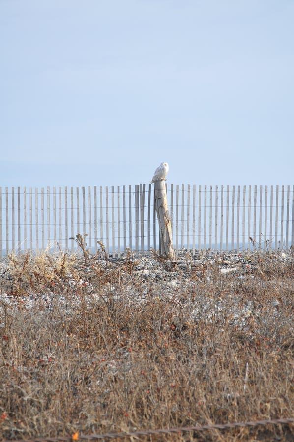 猫头鹰布拉格多雪的动物园 库存图片
