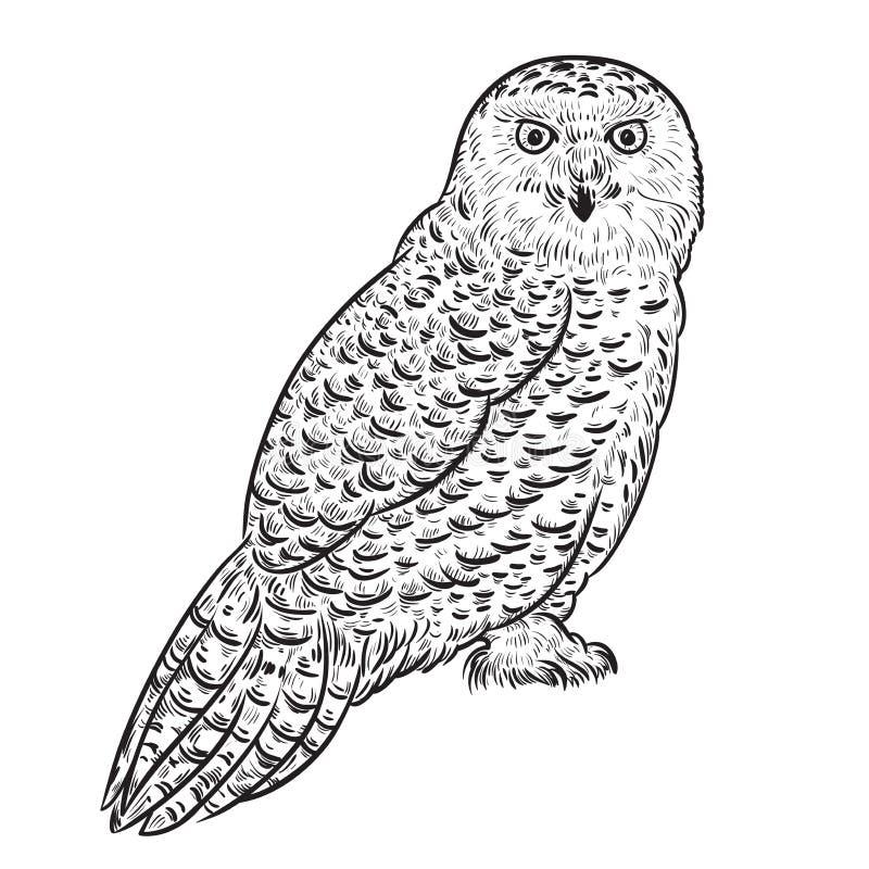 猫头鹰布拉格多雪的动物园 向量例证