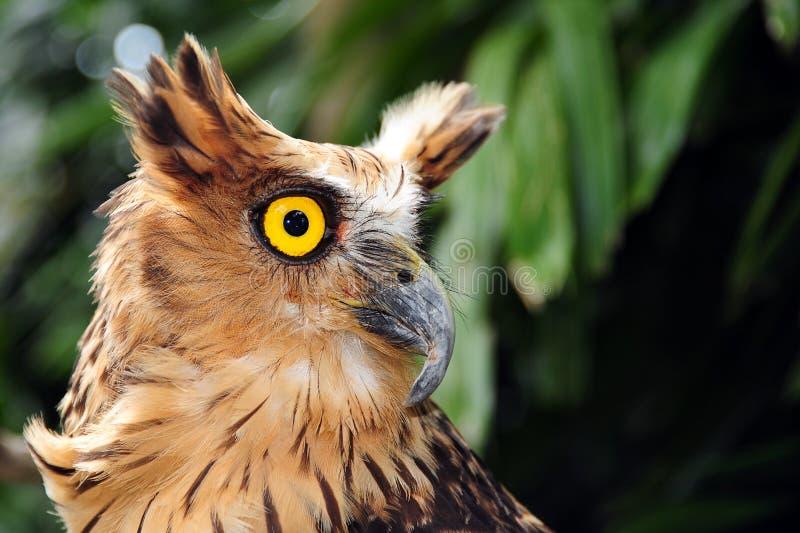 猫头鹰纵向坐的结构树 免版税图库摄影