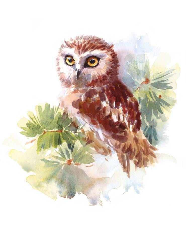 猫头鹰水彩手画鸟的例证 向量例证