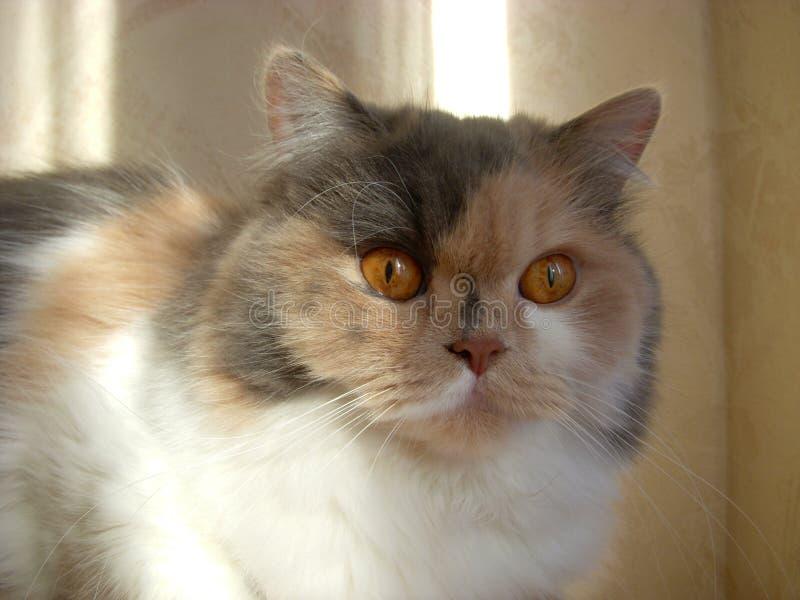 猫头 免版税库存照片