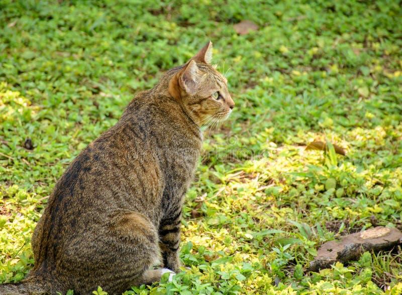 猫` s姿态 免版税库存照片