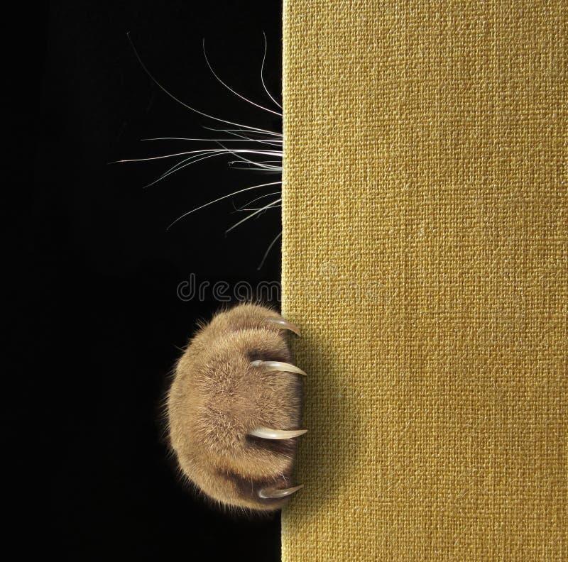 猫` s爪子和颊须在书 免版税图库摄影
