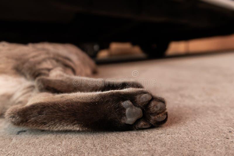 猫` s脚 免版税库存图片