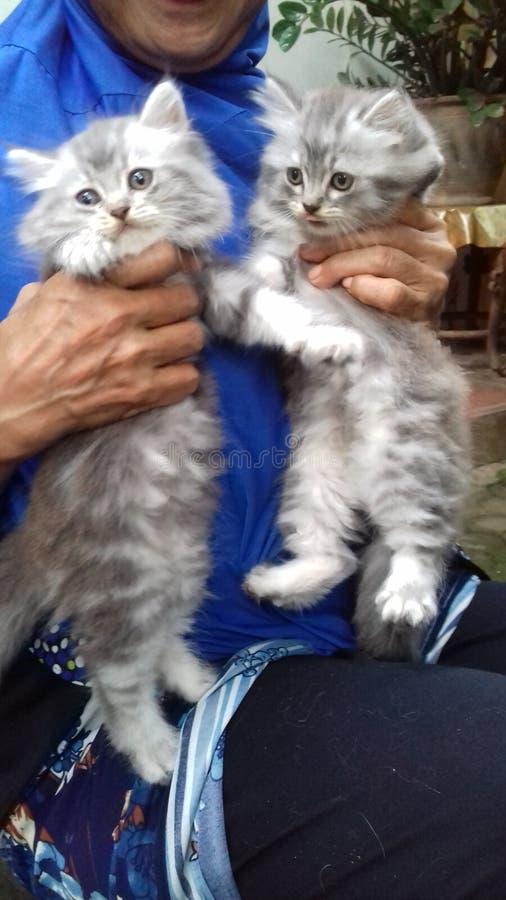 猫funy猫 免版税图库摄影