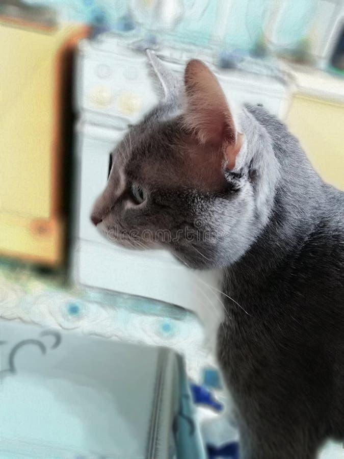 猫Murzik 免版税库存照片