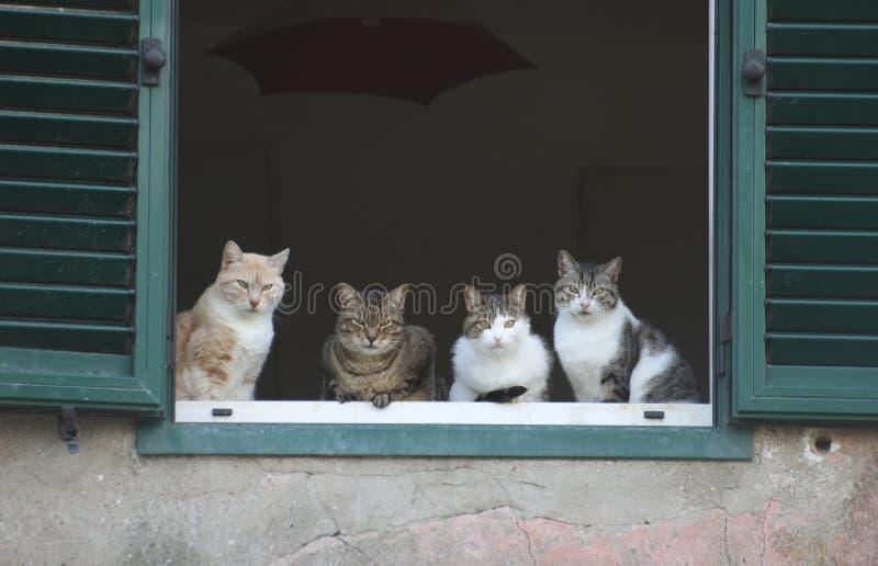 猫s视窗 库存照片