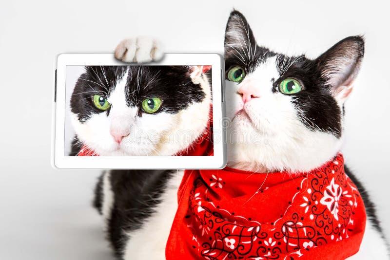 猫selfie 图库摄影