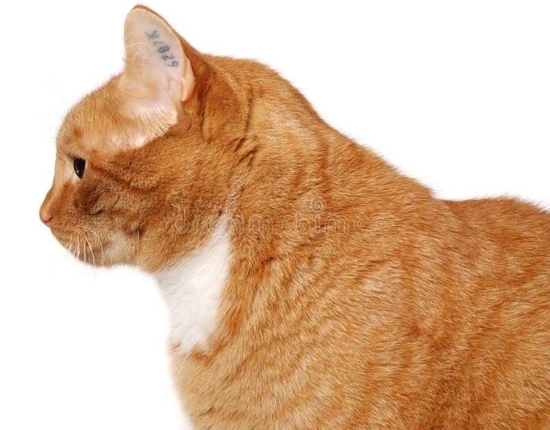 猫tatoo 库存图片
