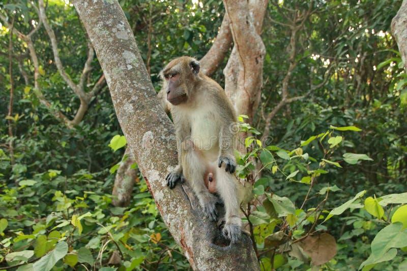 猴子坐和吃在森林里 免版税库存图片