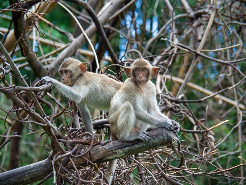 猴子坐树 库存照片