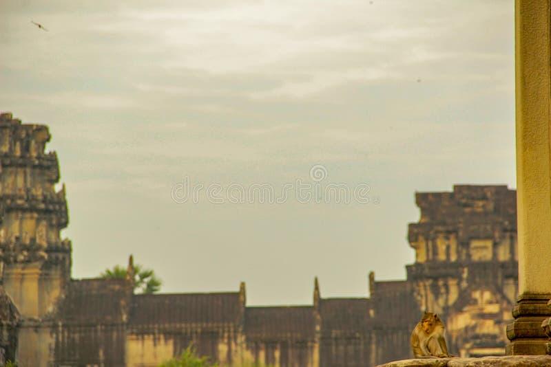 猴子寺庙在斋浦尔市,印度 库存图片