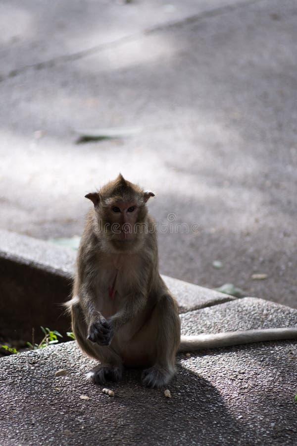 猴子接近的画象  免版税库存图片