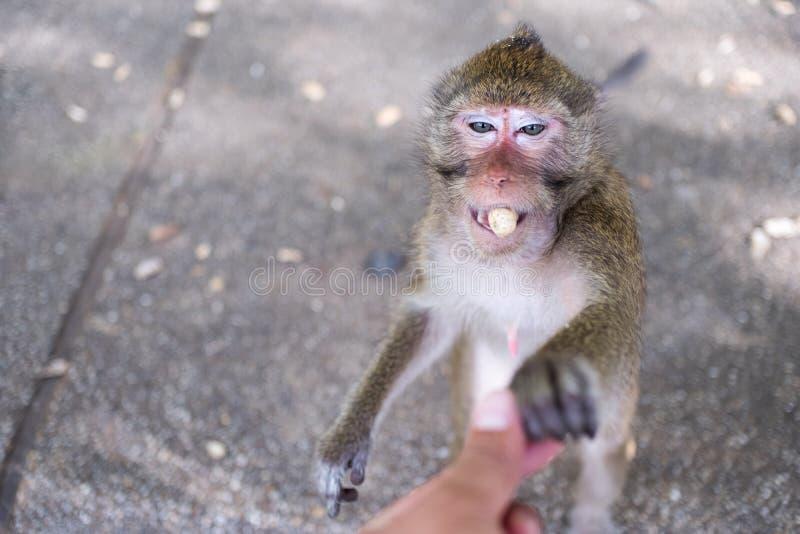 猴子接近的画象  库存照片