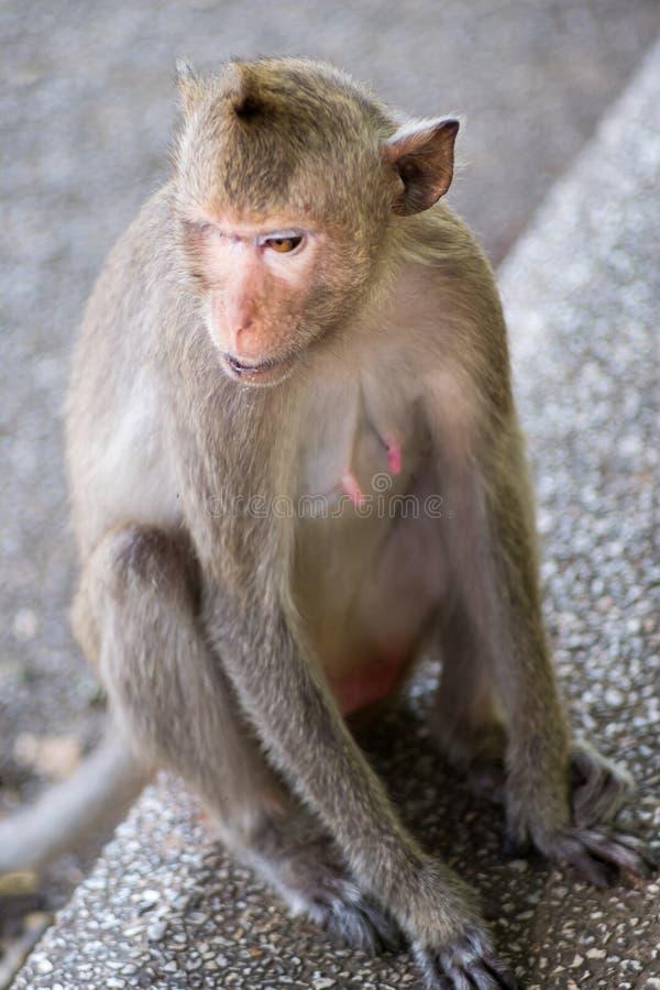 猴子接近的画象  免版税图库摄影