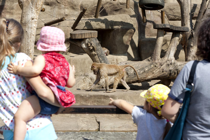 猴子游人华沙动物园 库存照片