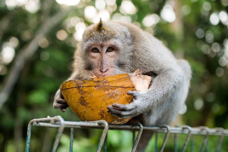 猴子画象 库存照片