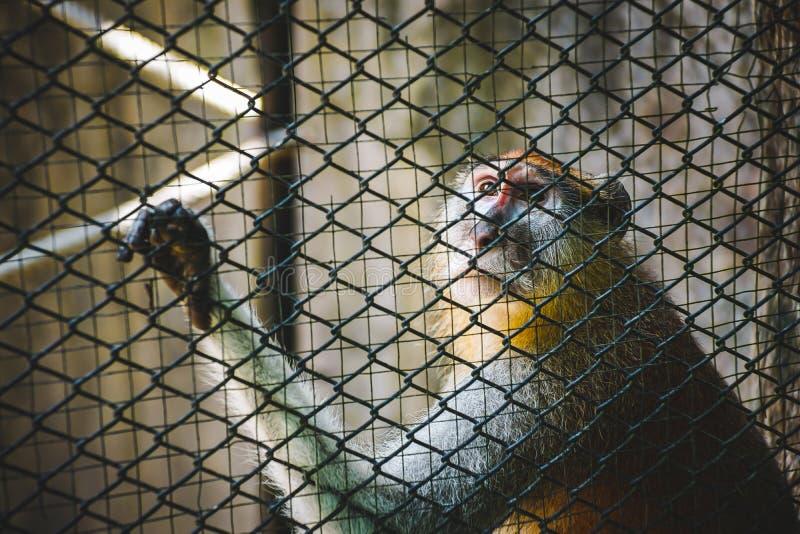 猴子看某事 图库摄影