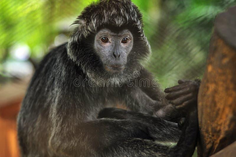 猴子类型动物 库存照片