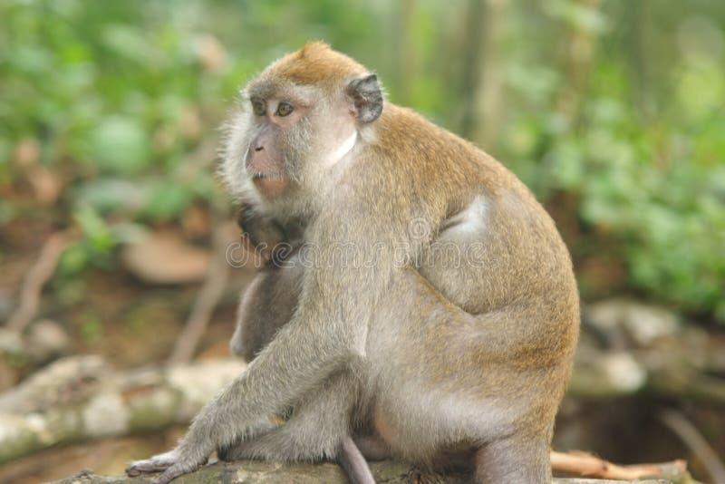 猴子包括有动物园,野生图片,仓鼠,木头,宠物,哺乳动物,敌意生物忘带饮水器