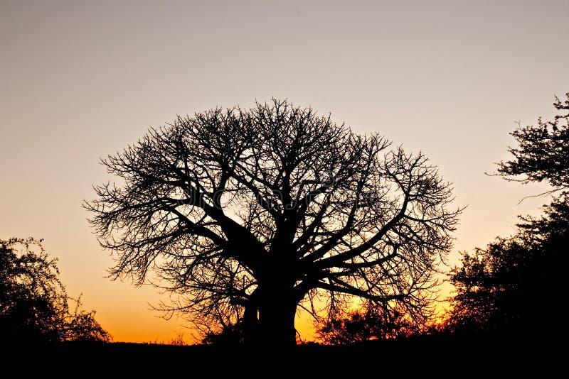 猴面包树剪影日落的非洲人 免版税库存照片