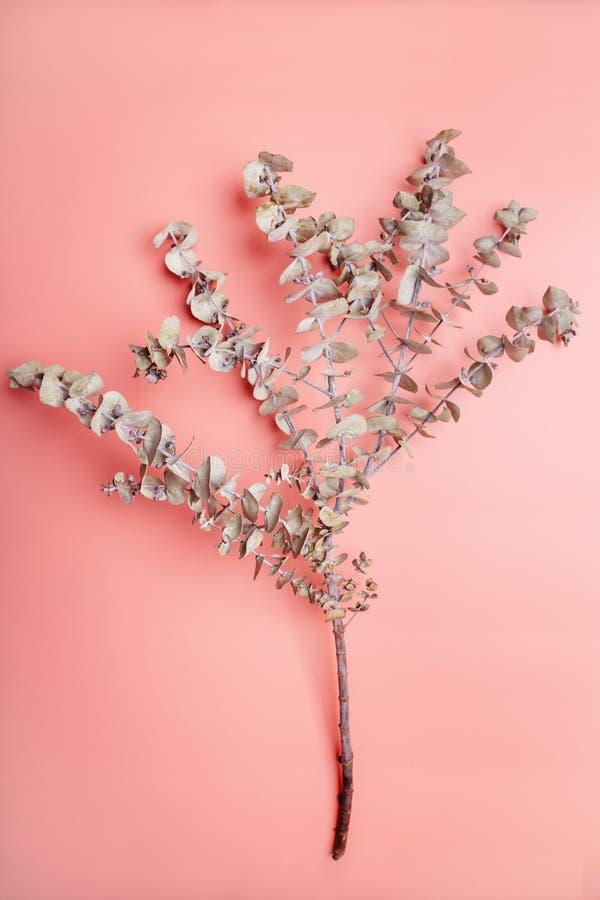 玉树分支顶上的看法在珊瑚桃红色背景的 免版税库存照片
